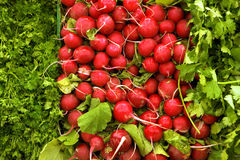 Selection of radishes, cilantro and parsley on display on market stall, close-up (full frame) Royalty Free Stock Photos