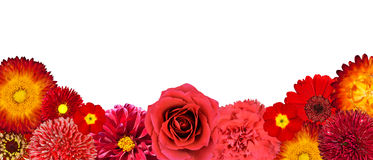 Selection of Red Flowers at Bottom row Royalty Free Stock Photos