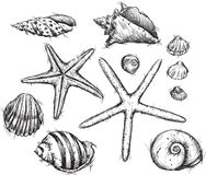 Selection of sea shells drawings Stock Photo