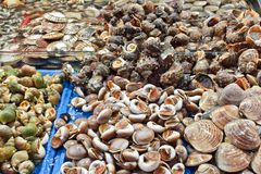 Selection of shells at seafood market Stock Photography