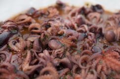 Selection of small octopus for italian anti pasti Stock Image