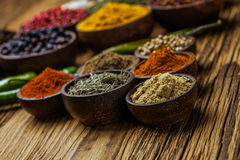 A selection of spices Stock Images