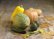 Selection of squash and marrows Royalty Free Stock Photo