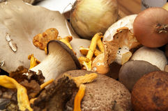 Selection of tasty mushrooms Stock Photos