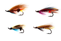 Selection of Traditional Salmon Fishing Flies on White Royalty Free Stock Image