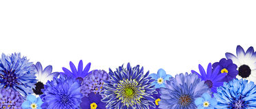 Selection of Various Blue Flowers at Bottom Row Royalty Free Stock Photography