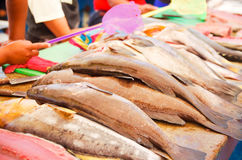 Selection of various fish laid out for sale at Stock Images
