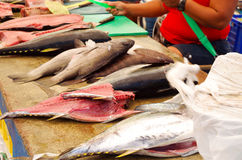 Selection of various fish laid out for sale at Royalty Free Stock Image