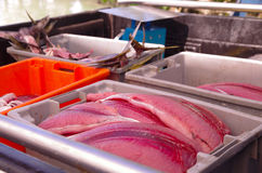 Selection of various fish laid out for sale at Royalty Free Stock Images