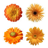 Selection of Various Flowers Isolated Stock Images