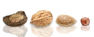 Selection of various nuts: almonds, Brazil nut, walnuts, hazelnu Royalty Free Stock Image
