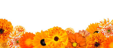 Selection of Various Orange Flowers at Bottom Row Stock Image