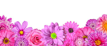 Selection of Various Pink White Flowers row Stock Image