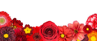 Selection of Various Red Flowers at Bottom Row Stock Photo