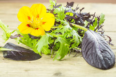Selection of wild herbs and a Nasturtium flower Royalty Free Stock Photography
