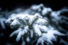 Selective Blur of Pine Tree With Snow Royalty Free Stock Photos