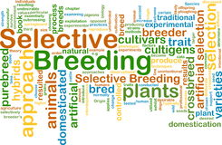 Selective breeding wordcloud concept illustration Royalty Free Stock Images