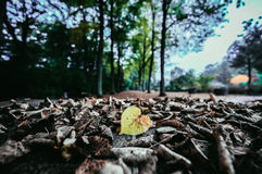 Selective Color Photo of Yellow Leaf Royalty Free Stock Photography
