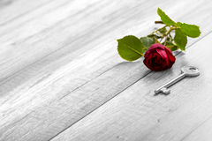 Selective colour of the rose in a greyscale image in a conceptua Royalty Free Stock Photos
