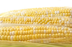 Selective Corn on the Cob Stock Photography
