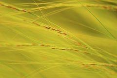 Wind blown grasses abstract. Stock Images