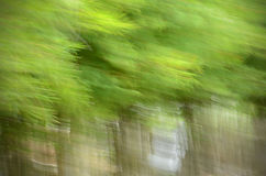 Selective focus of bamboo forest. Royalty Free Stock Images