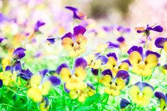 Selective focus of beautiful colorful flowers vintage color style. royalty free stock photo