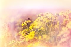 Selective focus on bee honey bee. In meadow of yellow flowers Stock Photo