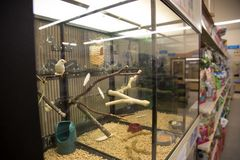 Selective focus on a bird. In a pet store Stock Photo