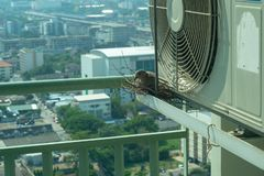 Selective focus on a bird sitting on the nest for hatching its eggs on the steel cage of condominium balcony stock photos
