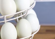 A rack of blue eggs. Selective focus on  blue eggs in a rack that are laid by theses breeds Legbar, Ameraucana,  Araucana and Easter chickens,front focus Royalty Free Stock Photos