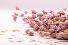 Selective focus bouquet of dried flowers on white background.Blurred and soft grass flower. stock photo