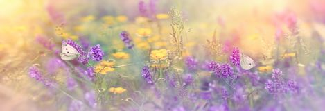 Selective focus on butterfly on lavender in meadow. Beautiful nature Stock Photo