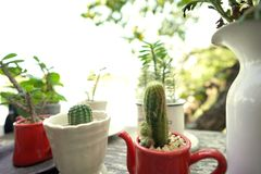 Selective focus of cactus in the coffee mug stock photos