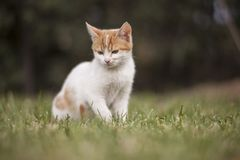 Selective Focus of Cat Sitting on Grass Field