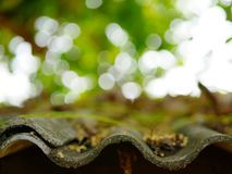 Selective focus and close up background of old grungy roof with leaves and stems falling on it against burry white brig Stock Photos