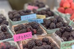 Organic blackberries in basket with plastic liner at farmer mark. Selective focus, close-up heap of organic blackberries in basket with plastic liner. Fresh Stock Photo