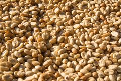 Selective focus of coffee beans stock photography