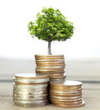 Selective focus of coins and big green plant growing. Royalty Free Stock Image