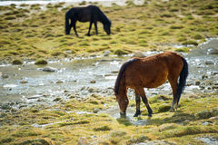 Selective Focus Couple Horse on Field Stock Images