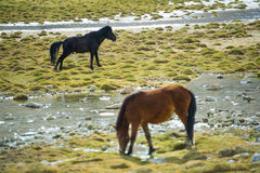 Selective Focus Couple Horse on Field Stock Image