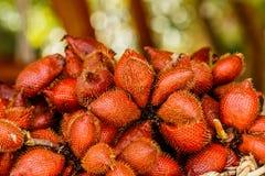 Selective focus of deep orange Zalacca. Royalty Free Stock Photos
