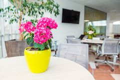 Selective focus on Geranium flowers pot with blurred background of light interior of open work space office with desks, chairs and. Green plants. Coworking royalty free stock image