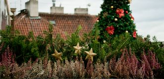 Horizontal image of fir hedge with Christmas tree on the background royalty free stock image