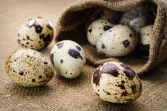 Selective focus image of a quail eggs Stock Photography