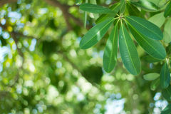selective focus of Leaf Royalty Free Stock Photos