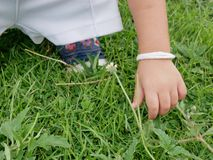 Little baby`s hand picking / touching grasses stock photography