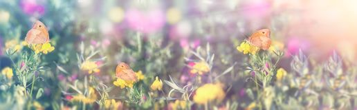 Selective focus on little butterfly - butterflies, beautiful meadow in spring. Beautiful landscape Royalty Free Stock Photography