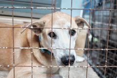 In selective focus a lonely dog with a poorly face sitting on cement ground floor in an old metal cage area stock photos