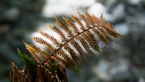 Selective focus macro photo of one dry brown fern branch stock image